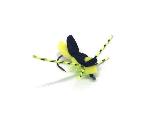 Beavertail Beetle