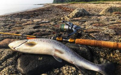 Fiskehviskernes juni
