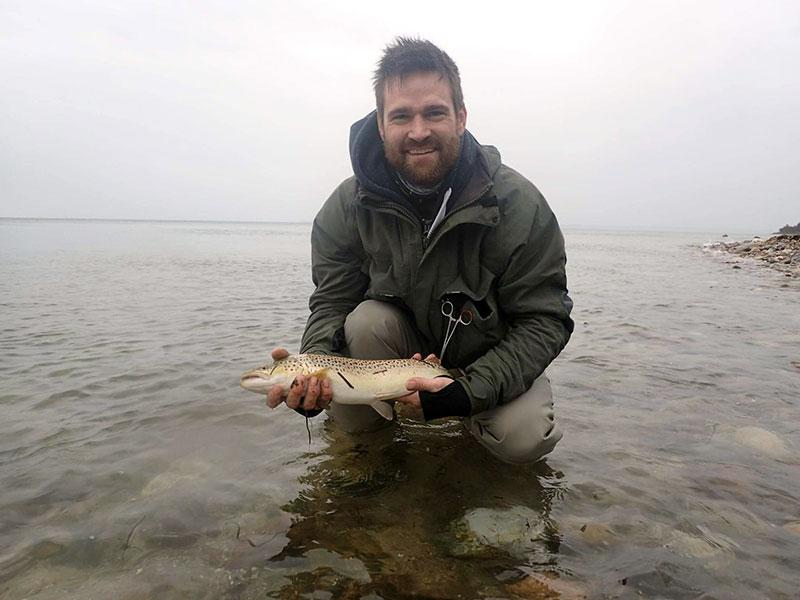 En af fiskene fra en større stime af fine eksemplarer
