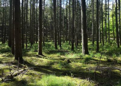 Noget der faktisk minder om rigtig skov