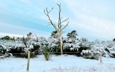 Vintervandring i Mols Bjerge